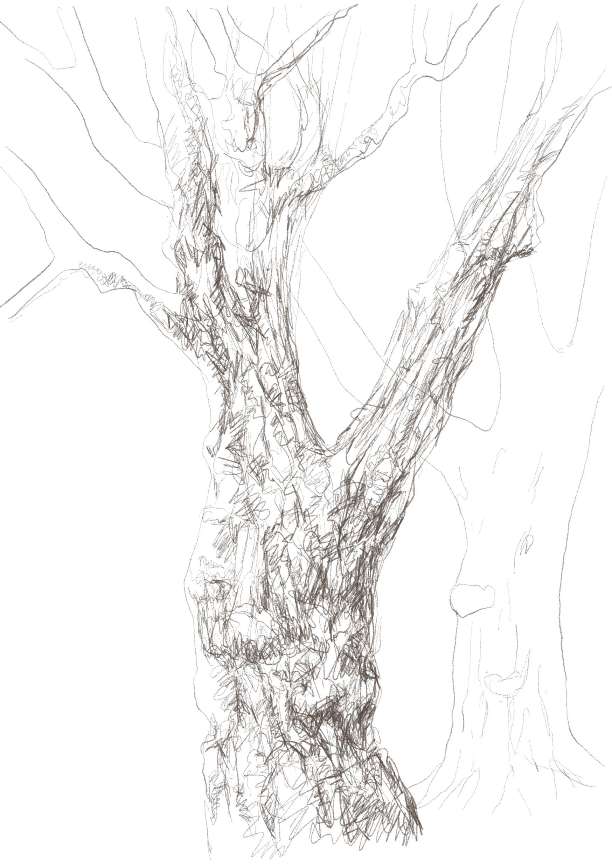 Buxbäume 01