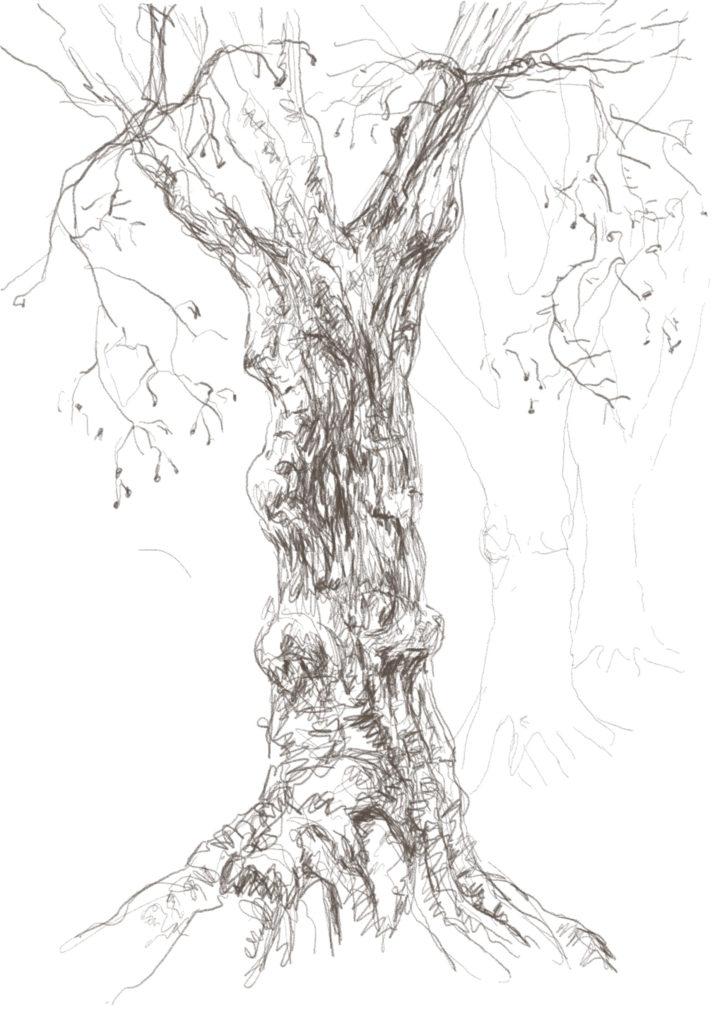 Buxbäume 02