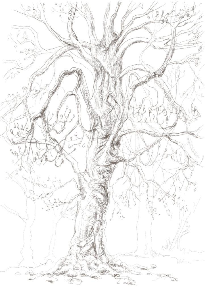 Buxbäume 03