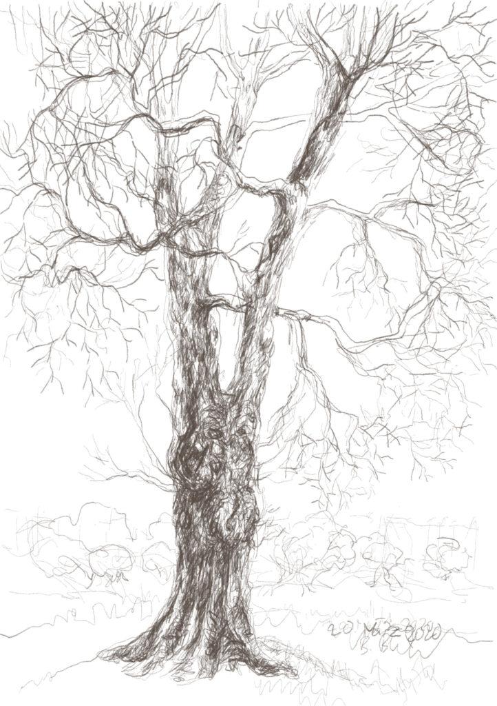Buxbäume 04