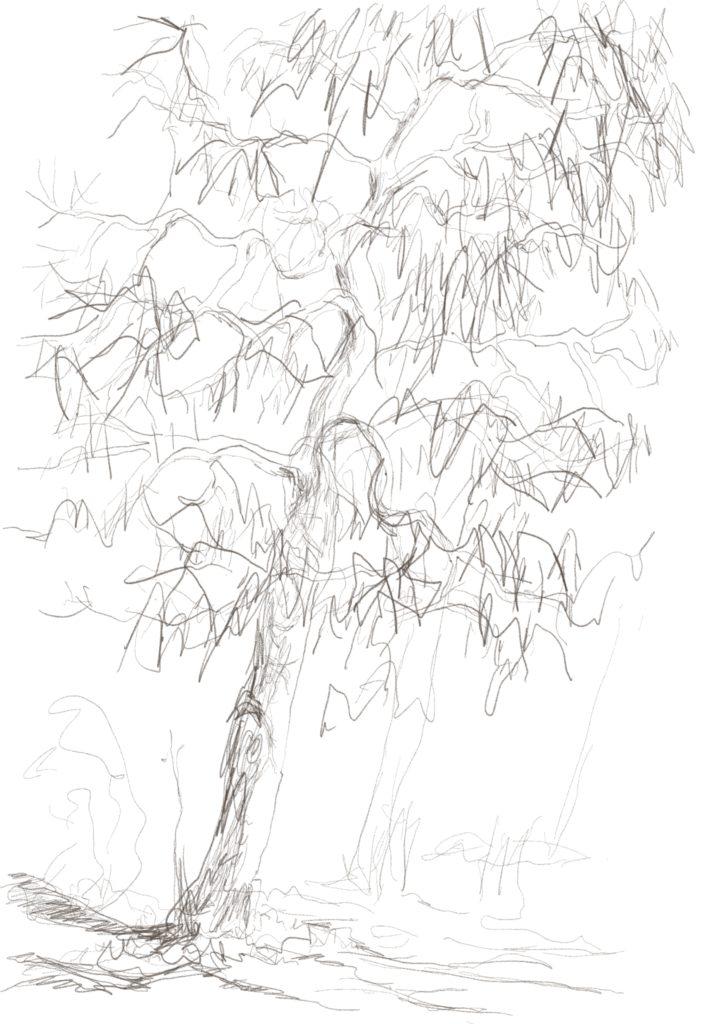 Buxbäume 05