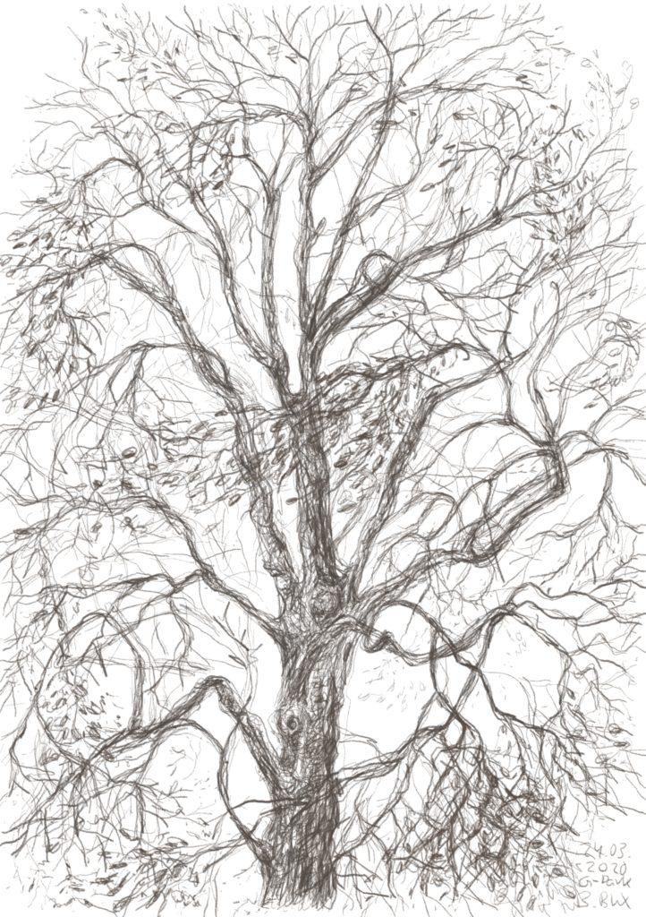Buxbäume 06